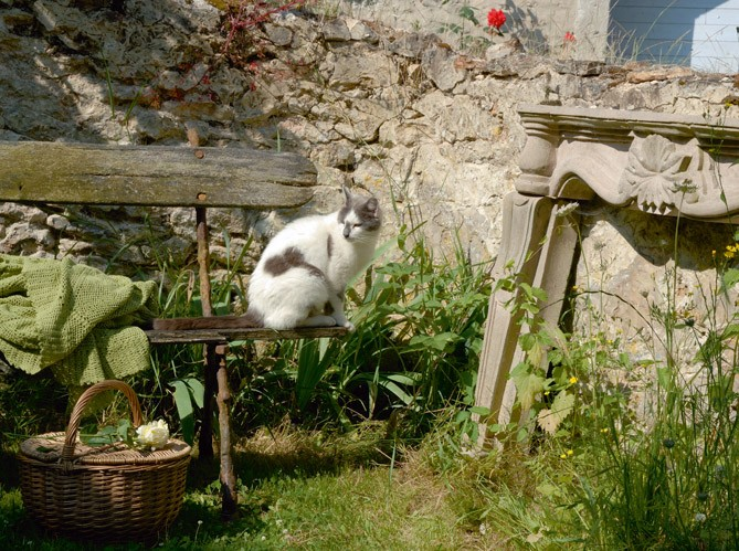 french-country-house-cat